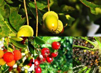 fig tree, palm tree, oak tree, jujube, coconut tree, areca palm, fig fruit, types of palm trees, arbouse