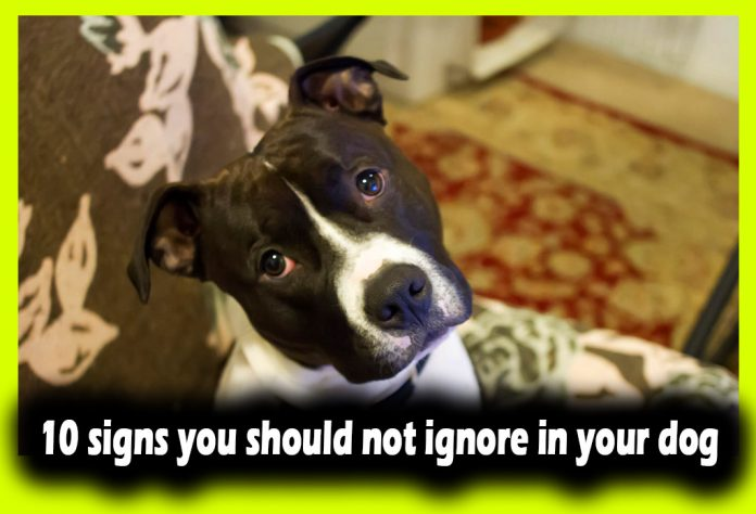 10 signs you should not ignore in your dog