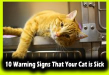 10 Warning Signs That Your Cat is Sick