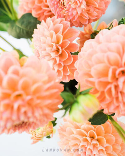 dalia-flowers-cherry-bill-quince-blossom-allium-Wallpaper-for-Mobile-4k